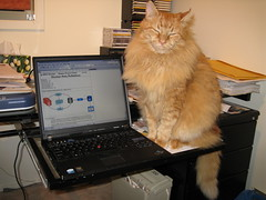 Neko not giving a damn that I have to work 3 (drayy) Tags: orange cat computer ginger furry keyboard desk laptop fluffy mainecoon neko paws ggg lolcat cc800 cc700 cc400 cc300 cc200 cc100 cc500 cc1000 cc600 cc900 oreengeness lolcats kittyschoice thebiggestgroupwithonlycats catnipaddicts
