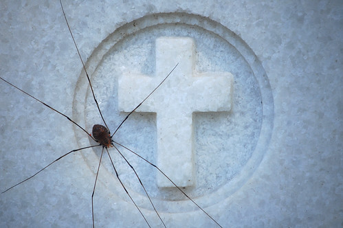 8-legged Jesus Freak