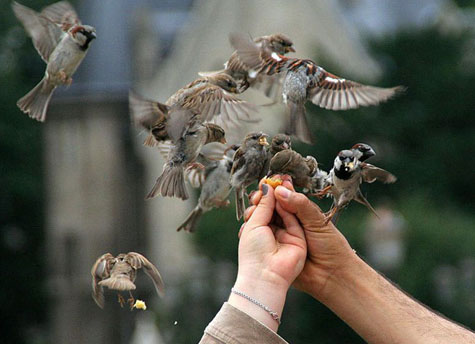 hand feeding the birds