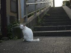 猫/cat