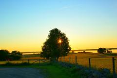 Fantasy (kezwan) Tags: sun tree nature fantasy kezwan 1on1sunrisesunsets