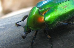 Blue in Green (Waleed Essam) Tags: macro nature bug insect canons3is riotofcolours