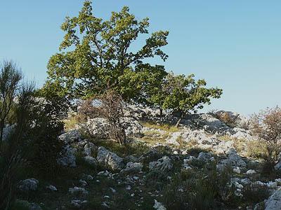 paysage Caussol cailloux.jpg