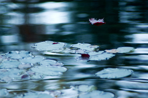 leaf on Lonely Pond