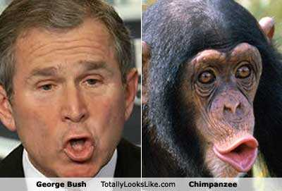 Bush-chimp.jpg