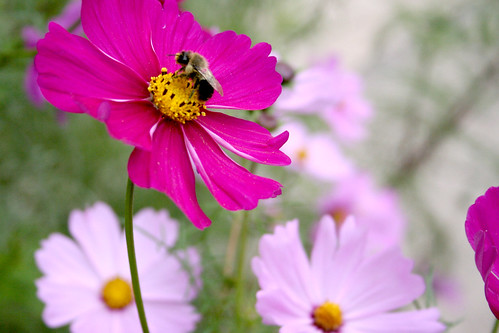 Bee in the Cosmos