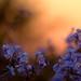Floral Sunset