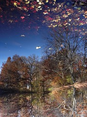 Jolchhobi (Joy Forever) Tags: trees usa reflection fall nature water leaves america newjersey upsidedown joy newark branchbrookpark naturesfinest sugata banerji joyforever sugatabanerji
