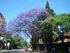 004 (Dann22) Tags: jacaranda