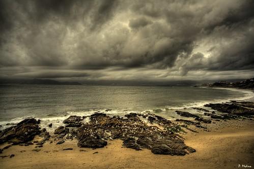 Mar, Cielo y Gaviotas por P. Medina.