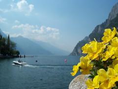 Gita sul lago.. (TeleJack) Tags: italy lago fiori primopiano lagodigarda rivadelgarda top20colorpix