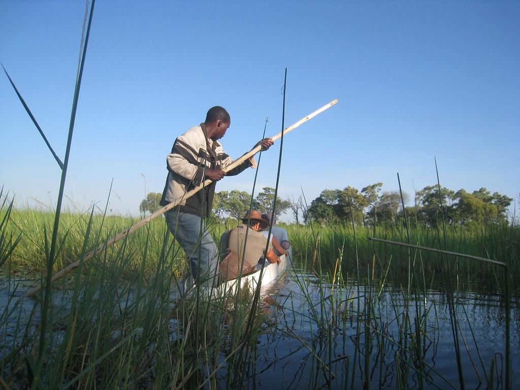 Steering mokoros through thick weeds isn't always an easy affair.
