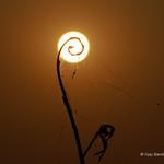 Sunset @ Gandipet