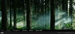 アサヒの森