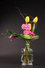surinder 059 (Colourbox Floral) Tags: surinder proflo
