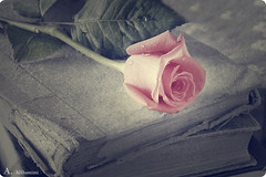 Still Life (Alawiyah Alshamimi) Tags: life old flower rose canon book still  d550   2470