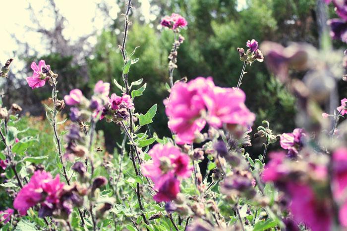 *wildflowers*