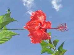 Selva fleur