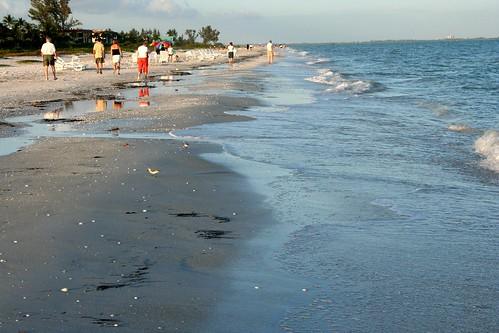 Beach Scavengers