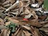 97.05.22平和國小吉貝木棉老樹DSCN0678