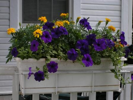 June 08 Flowers