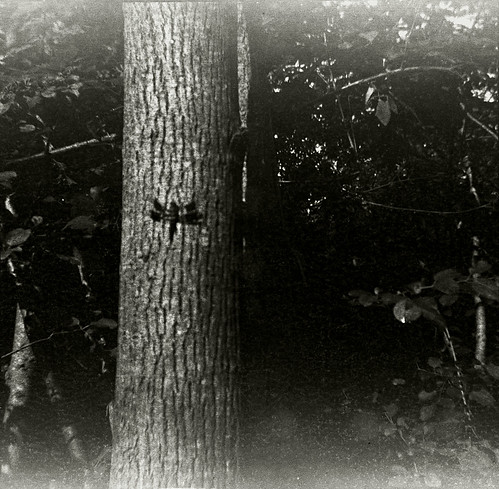 kbf-cny-dragonfly