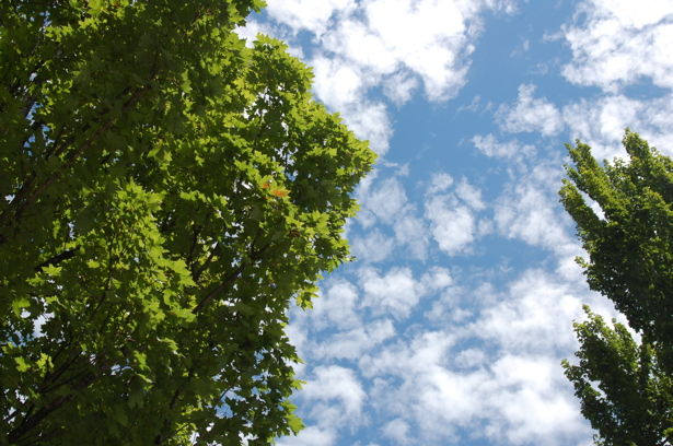 072708_trees_sky_from_max_stop