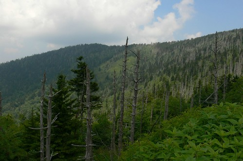Veiw from Clingmans Dome trail