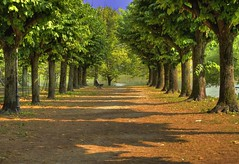 Hall of relax (Fabio Montalto) Tags: italy tree green bench explore lombardia soe hdr angera naturesfinest blueribbonwinner photomatix nikond200 lifeasiseeit supershot hdrfromasingleraw abigfave anawesomeshot colorphotoaward diamondclassphotographer flickrdiamond goldstaraward damniwishidtakenthat wagman30
