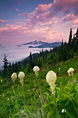 Beargrass Sunrise (KPieper) Tags: bear pink color grass clouds sunrise landscape mt rainier cascades pacificnorthwest wildflowers mtrainiernationalpark mrnp kevinpieper kpieper pieperphotographynet