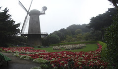 Juliana garden