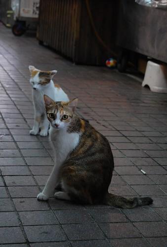 華山市場遇見貓