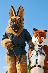 The World's Best Photos of furry and police - Flickr Hive Mind