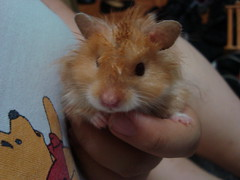 DSC02261 (prudencemadness) Tags: hamsters