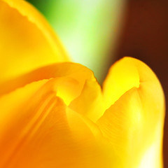 intrinsic.... (janoid) Tags: flower love yellow bravo heart warmth tulip heat xoxoxox infinestyle hugstoyousweetie janslightstyle janalicious janoidmagic janoidsstyle haveawarmwonderfulweek