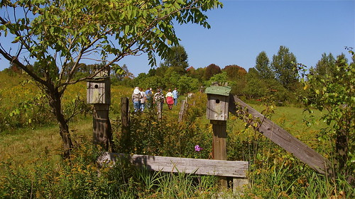 hikers and birdhouses