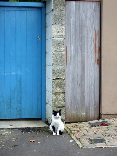 Kinsale cat
