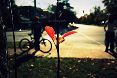 Between you and yourself (feelings*) Tags: street autumn people flower tree field grass bike photography dof crossroad depth kd fal keidi flickrlovers