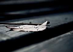 dying in silence, between the tears of heaven. ([V1V1]) Tags: vivianaisca v1v1 v1v14n4 nikon nikond80 nikkor lightroom sigma1770mmf2845dcmacro pdc macro dof foglia gocce goccia drop drops leaf panchina bench autunno pioggia autumn rain tears bokeh goldstaraward theperfectphotographer anawesomeshot v1v1colour v1v1stilllife v1v1macro v1v1senzapelle