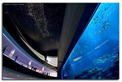 Hyper-Mega-Aquarium (DanielKHC) Tags: digital aquarium interestingness high nikon dubai dynamic uae explore handheld range dri hdr blending d300 dynamicrangeincrease interestingness73 4exp dubaimall danielcheong danielkhc explore22nov08 gettyimagesmeandafrica1