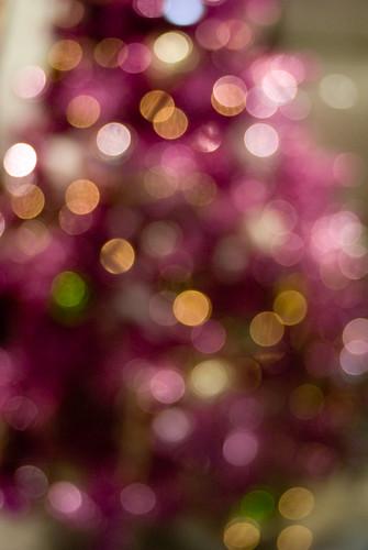 pink bokeh tree