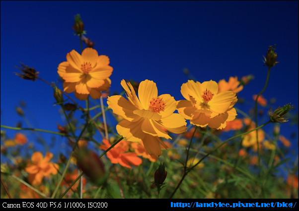 9711-新社花海:Date with Bee_095.jpg