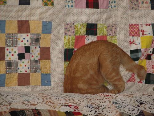 cat attains enlightenment #1