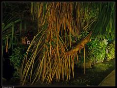 Raices / Roots (drlopezfranco) Tags: naturaleza tree beach nature arbol guatemala roots playa raiz raices escuintla aplusphoto pacfico