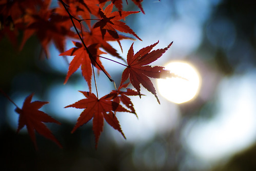 Autumn in Yoyogi 02