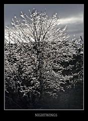 Shine On You Crazy Diamond (Nightwing5-limited Flickr time) Tags: trees nature landscapes naturelovers photochallenge blueribbonwinner inspiredbylove kartpostal platinumphoto anawesomeshot flickrbestpics damniwishidtakenthat dragondaggerphoto inspiredbyyourbeauty masterofthelight