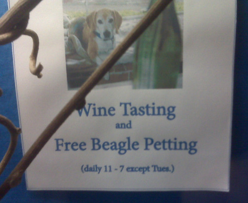 free_beagle_petting_wine