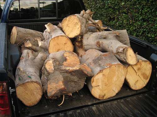 3rd and 4th hauls of fig logs