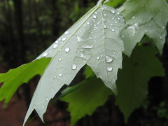 Raindrops on a leaf Photo
