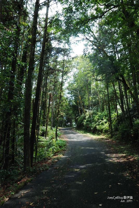 【南投】阿薩姆紅茶的故鄉。貓蘭山步道之旅DSC_1753